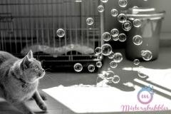 misterybubbles_00020