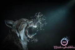 misterybubbles_00030