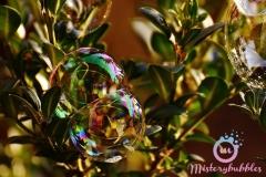 misterybubbles_00066