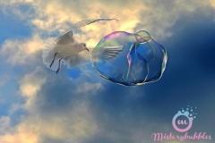 misterybubbles_00073