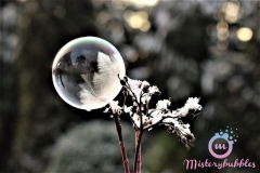 misterybubbles_00091