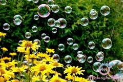 misterybubbles_00116